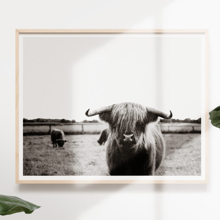 highland-cow-cattle-free-print